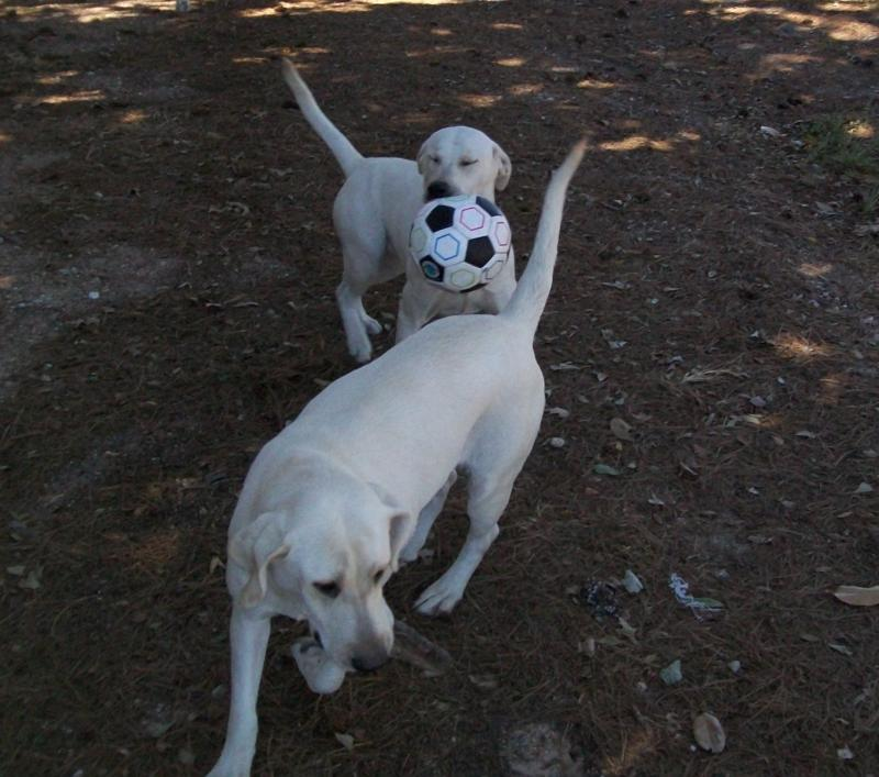 Rice and Camo playing soccer!